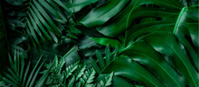 Closeup Nature View Of Tropica...
