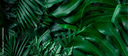 closeup nature view of tropical green monstera leaf and palms background. Flat lay, fresh wallpaper banner concept - fototapety na wymiar