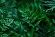 Leinwandbild Motiv closeup nature view of green monstera leaf and palms background. Flat lay, dark nature concept, tropical leaf