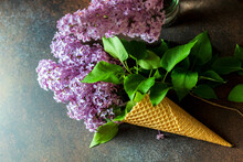 Beautiful Lilac Flowers In An ...