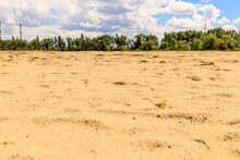Sand Mound Overlooking The Dense Vegetation And Sky In The Clouds. The Sand Is Bright, Clean. There Are No People.culm And Tranquility On Photo. High Quality Photo