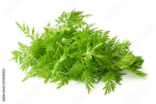 Fototapeta Artemisia annua plant obraz