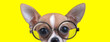 canvas print picture - curious chihuahua puppy with big eyes wearing glasses