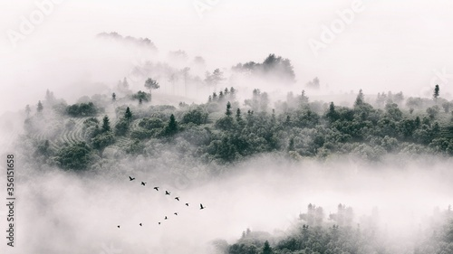 Obraz Eerie scenery of a forest of spruces during a foggy weather - fototapety do salonu