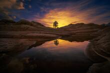 A Lone Tree Illustrates Stren...