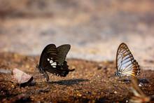 The Beauty Of Butterflies Look...