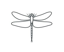 Dragonfly Outline. Isolated Dr...
