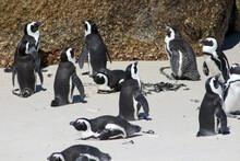 A Penguin Parade In The Beach