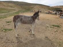 A Beautiful Donkey And He's Alone