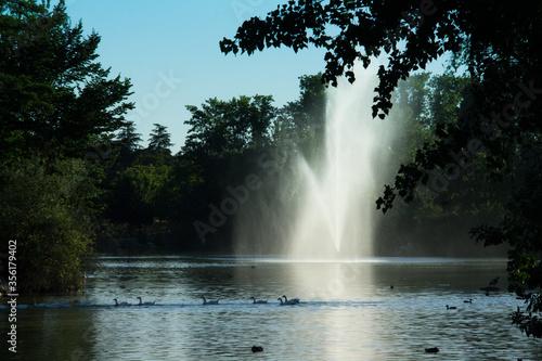 krajobraz park zieleń woda natura fontanna