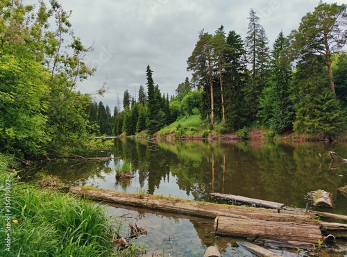 forest shore of the lake in the city with logs and boards in the water against a gray cloudy sky #356179822