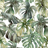 Watercolor big seamless pattern with tropical monstera. Hand painted exotic leaves and branches isolated on white background. Floral spring illustration for design, print, fabric or background. - 356192648