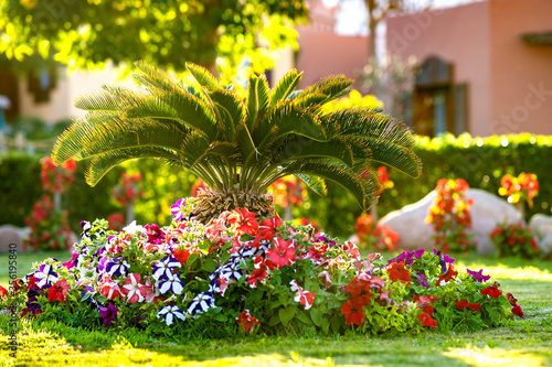Photo Small green palm tree surrounded with bright blooming flowers growing on grass covered lawn in tropic hotel yard