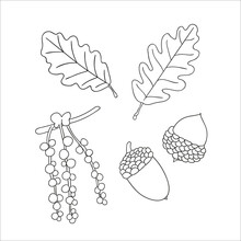 Vector Set Of Line Oak Tree Elements Isolated On White Background. Botanical Illustration Of Oak Leaf, Brunch, Flowers, Acorns, Ament. Black And White Clip Art