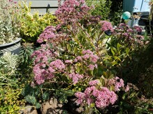Green Plant With Pink Flowers And Other Green Plants Outdoor