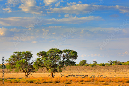 Photo Kgalagadi landscape, animals and trees near the water hole