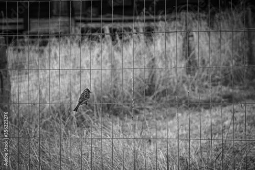 Pájaro en un alambrado en blanco y negro Canvas Print