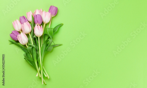 Fototapety, obrazy: Pink tulips over green background