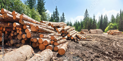 Photo Pile of harvested wooden logs in forest, trees with blue sky above background
