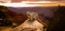 Cute Little Brown Grand Canyon...