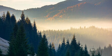 Forest Landscape In Mist. Moun...