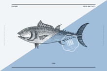 Hand-drawn Tuna Vector Illustration. Sea Fish In Engraving Style On A Light Background. Design Element For Fish Restaurant, Market, Store, Flyer, Packaging, Label, Menu.