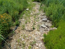 Dry Stream Bed With Rocks And Plants