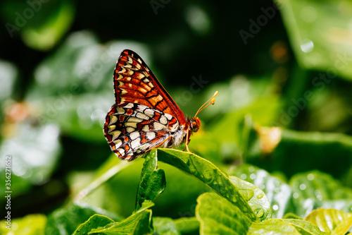 Beautiful Buttfly
