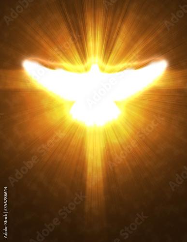 Obraz shining dove with rays on a dark - fototapety do salonu