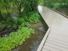 Boardwalk With Water And Beave...