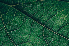 Closeup Leaf Texture. Abstract...