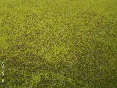 Valokuva green algae plants covering stagnant water in a lake