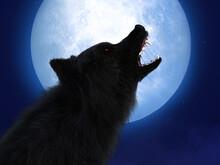 3D Rendering Of Black Wolf Wit...