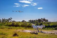 White Horses And Pink Flamingos