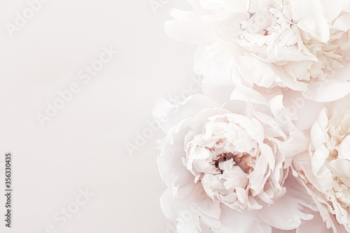 Pastel peony flowers in bloom as floral art background, wedding decor and luxury Fototapete