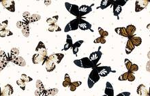 Beautiful And Dainty Butterfli...