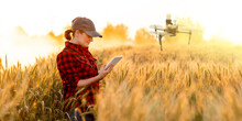 A Woman Farmer Examines The Fi...
