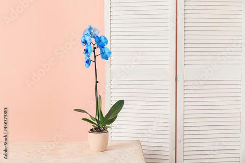 Fototapeta Beautiful orchid plant on table obraz