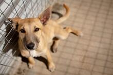 Little Dog In A Dog Shelter