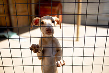 Little Dog Behind A Fence In A Dog Shelter