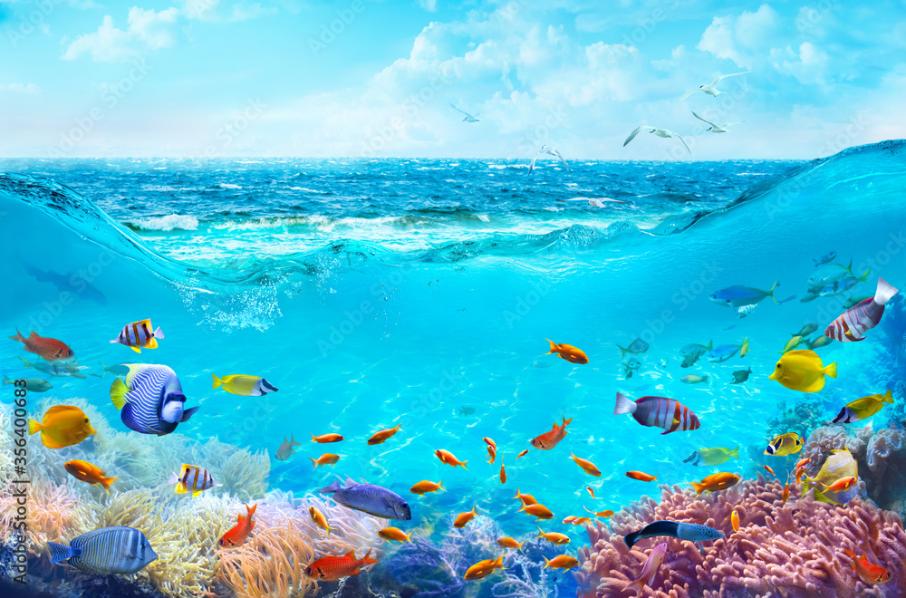 Fototapeta Colorful tropical fish in coastal waters. Animals of the underwater sea world. Life in a coral reef. Ecosystem.