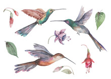 Set Of Three Hummingbird Birds In Flight With Spread Wings, Pink Fuchsia Flowers And Buds With Green Leaves. Composition Of Individual Elements On A White Background For Design. Watercolor.