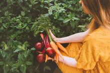 Vegetables Harvest Freshly Pic...