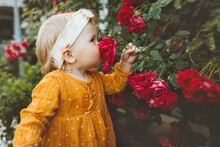 Child Girl Smelling Flowers Red Roses In Garden Childhood Baby Summer Lifestyle Aromatherapy Harmony With Nature
