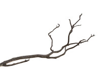 Dry Branch Of Dead Tree With C...