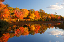 Fall Colors In Acadia National...