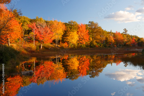 Fall colors in Acadia National Park with Brilliant colorful trees reflected in B Wallpaper Mural