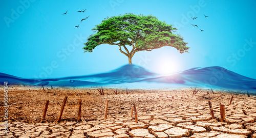 Photo Picture of dry soil and mountains caused by water With a green tree atop the con