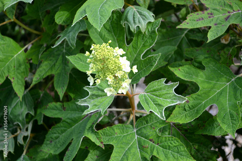 White Flowers and Green Leaves Foliage