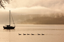 Ducks Swimming By A Sailboat A...